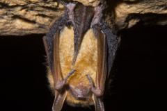 7318: Fuzzy Bat